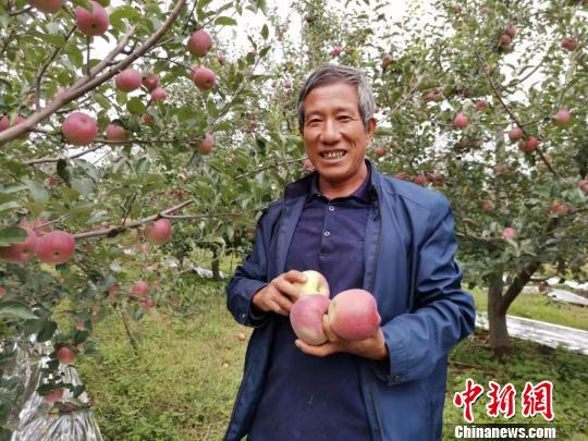 """四川盐源:""""金苹果""""串起果农致富链"""